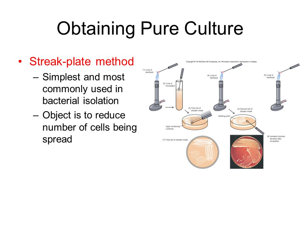 Obtaining Pure Culture