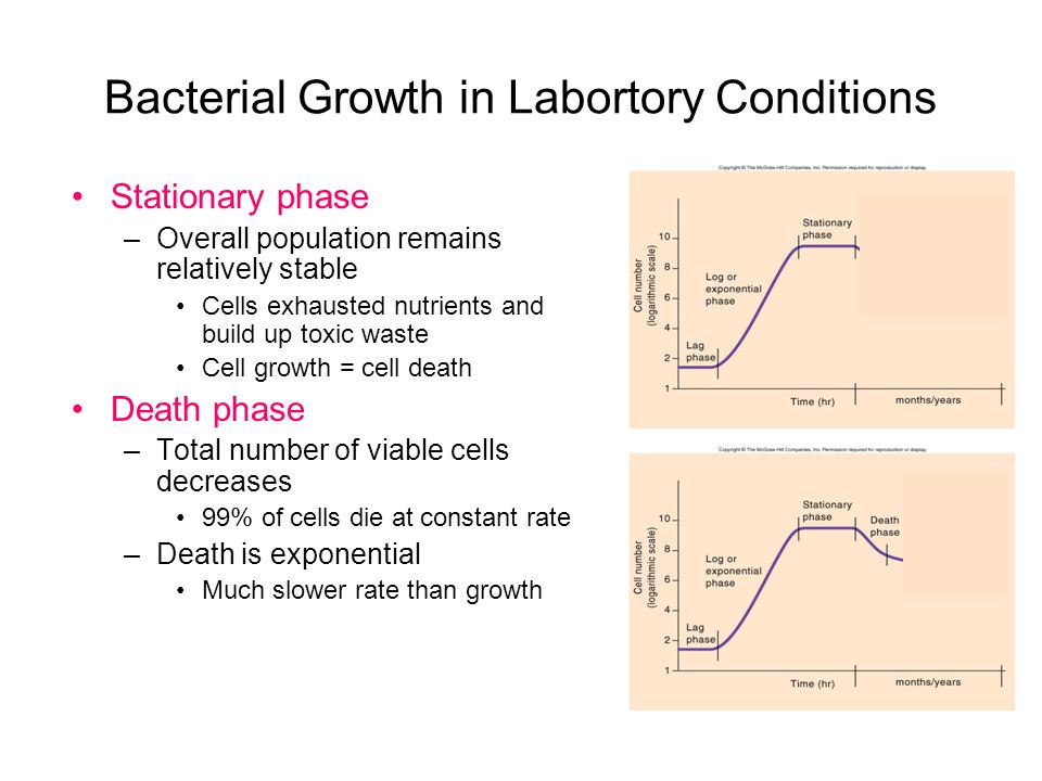 Bacterial Growth in Labortory Conditions