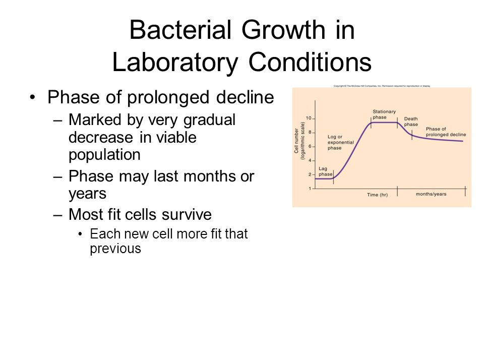 Bacterial Growth in Laboratory Conditions