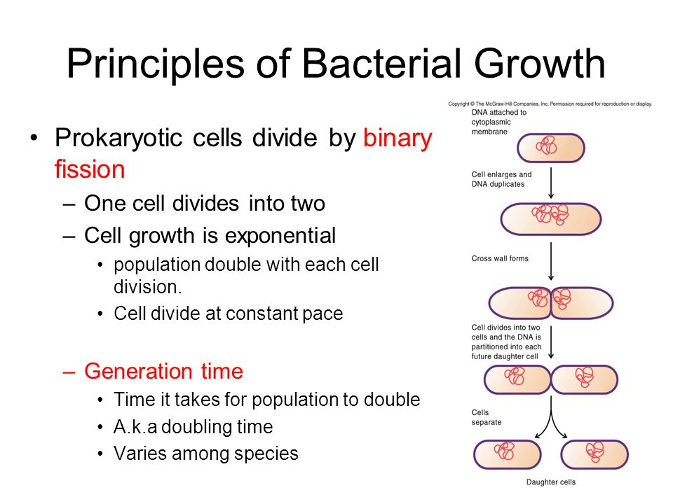 Principles of Bacterial Growth