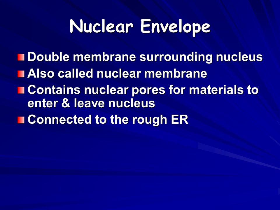 Nuclear Envelope Double membrane surrounding nucleus