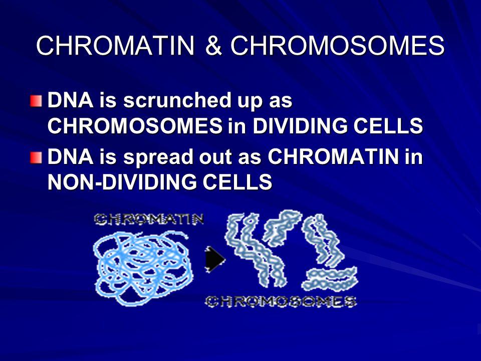CHROMATIN & CHROMOSOMES