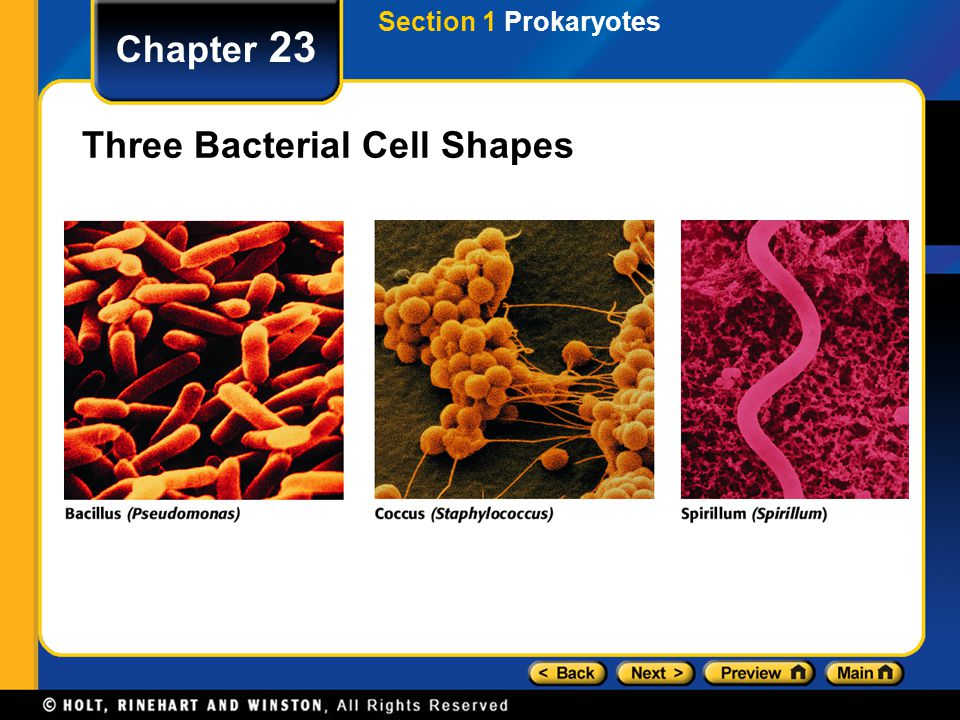 Three Bacterial Cell Shapes