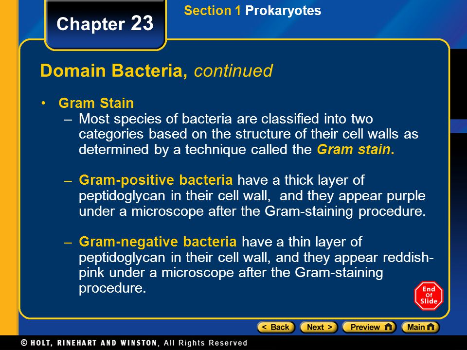 Domain Bacteria, continued