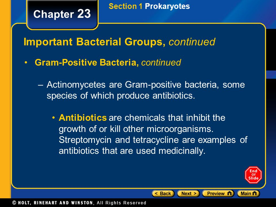 Important Bacterial Groups, continued