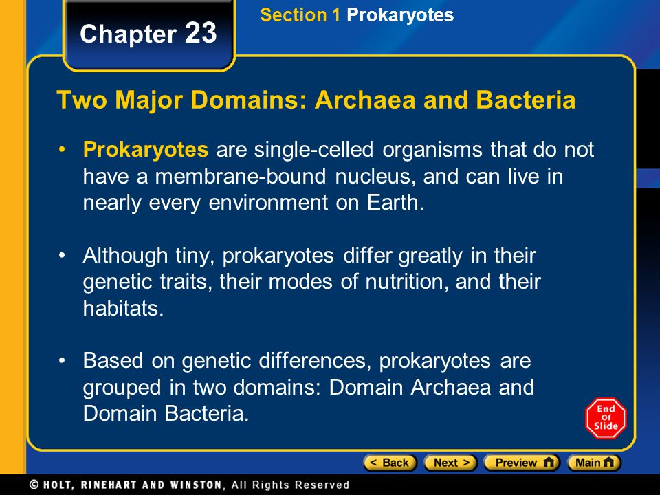 Two Major Domains: Archaea and Bacteria