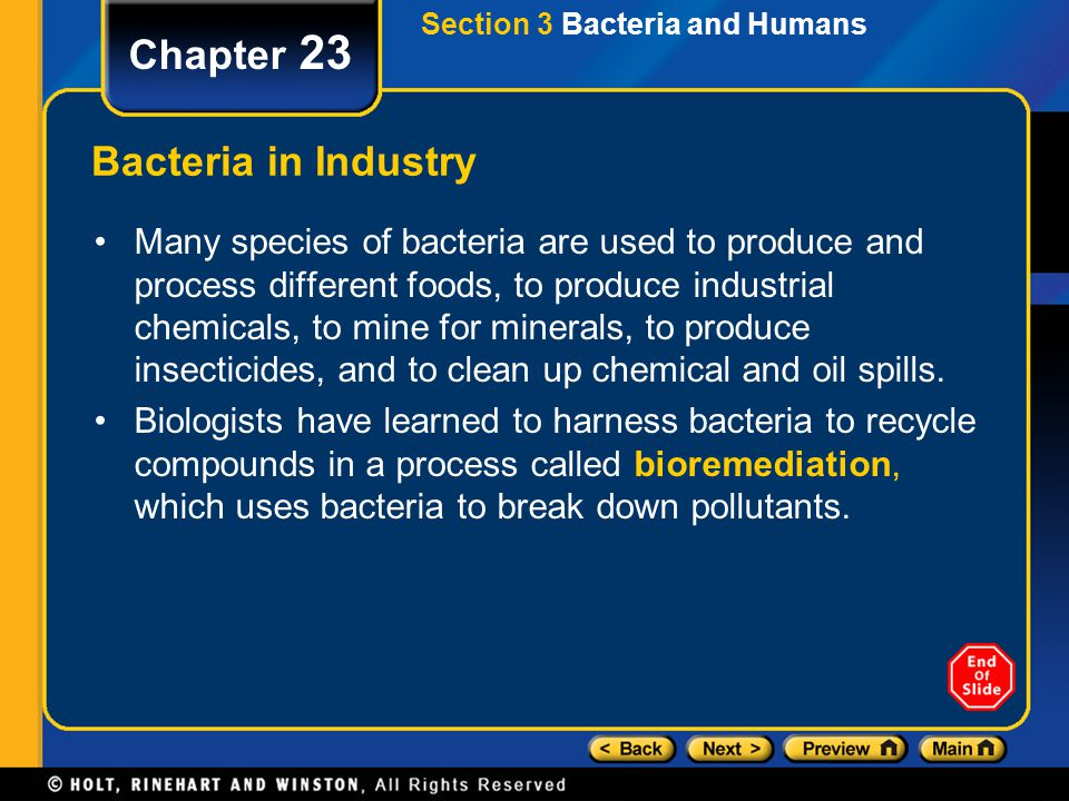 Chapter 23 Bacteria in Industry