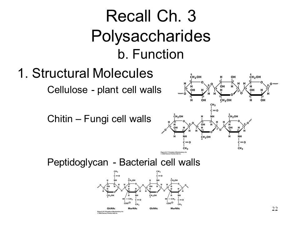 Recall Ch. 3 Polysaccharides