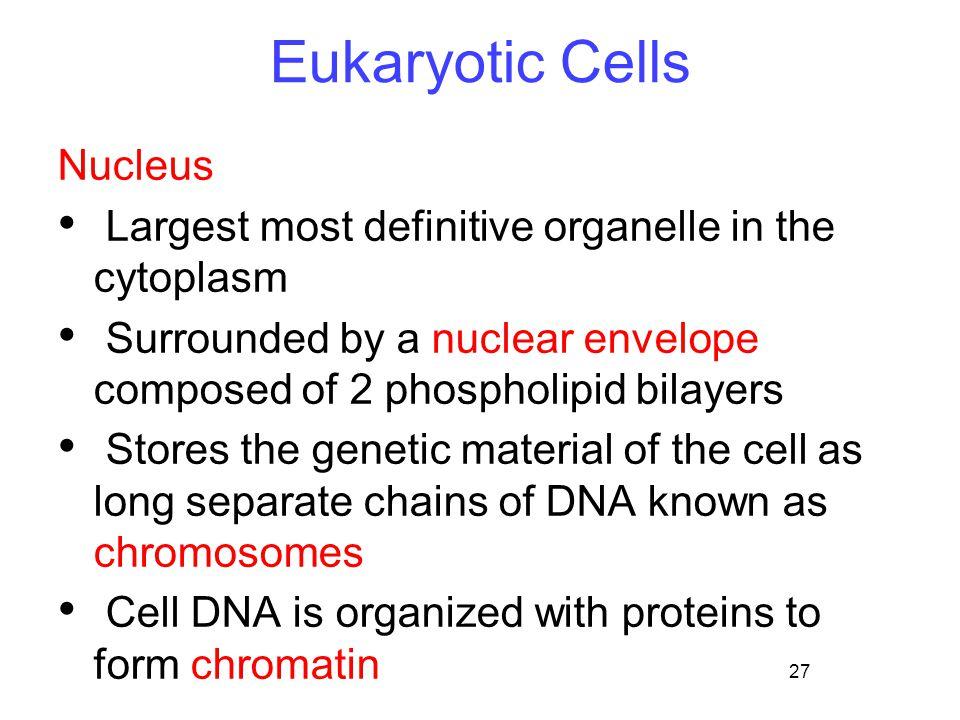 Eukaryotic Cells Nucleus