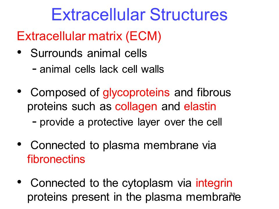 Extracellular Structures