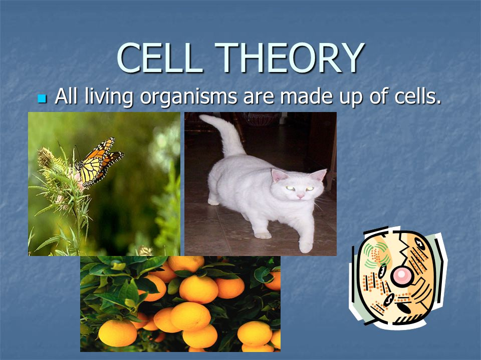 CELL THEORY All living organisms are made up of cells. .