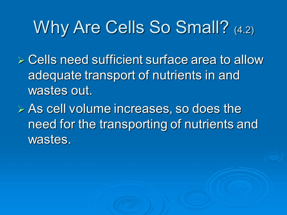 Why Are Cells So Small (4.2)