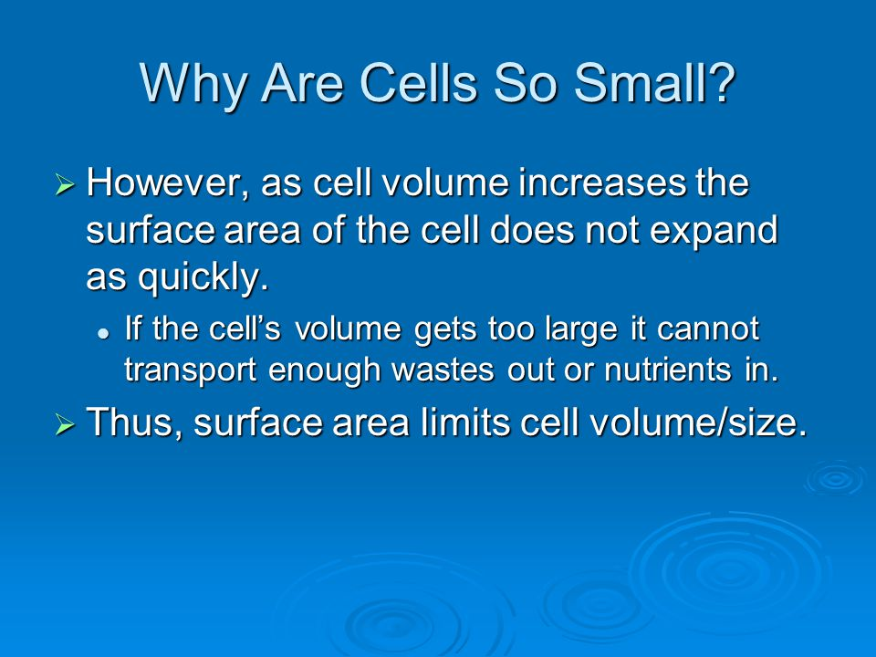 Why Are Cells So Small However, as cell volume increases the surface area of the cell does not expand as quickly.