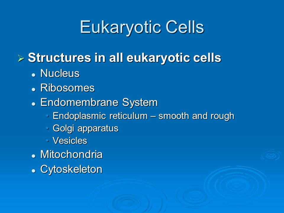 Eukaryotic Cells Structures in all eukaryotic cells Nucleus Ribosomes