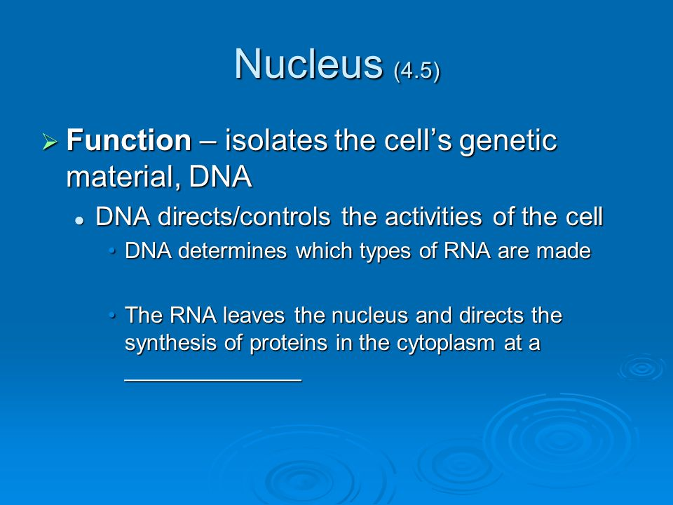 Nucleus (4.5) Function – isolates the cell's genetic material, DNA