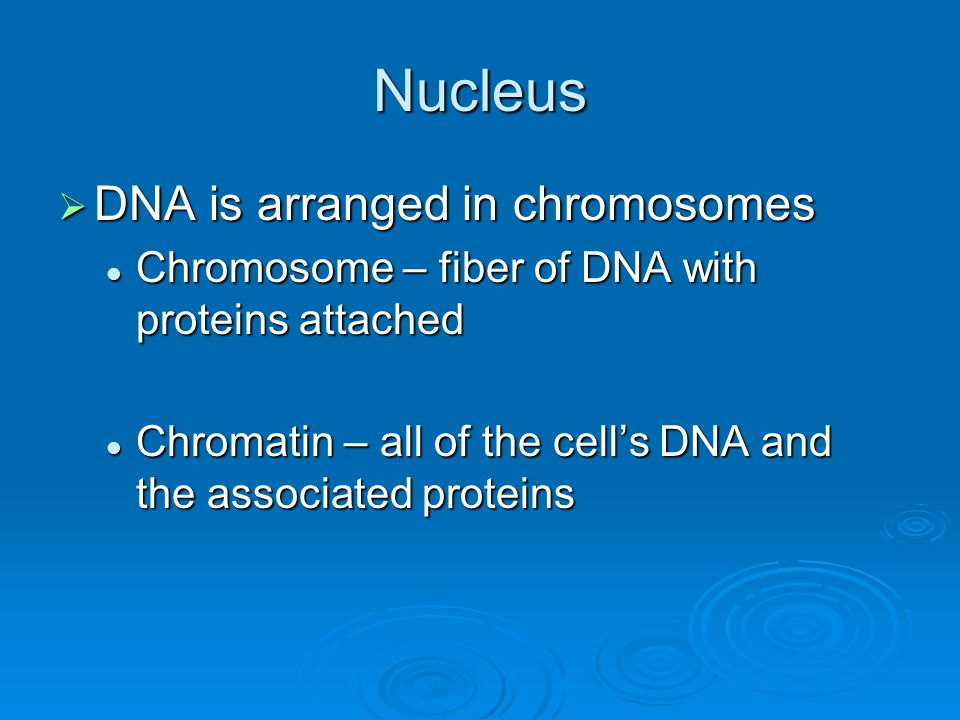 Nucleus DNA is arranged in chromosomes