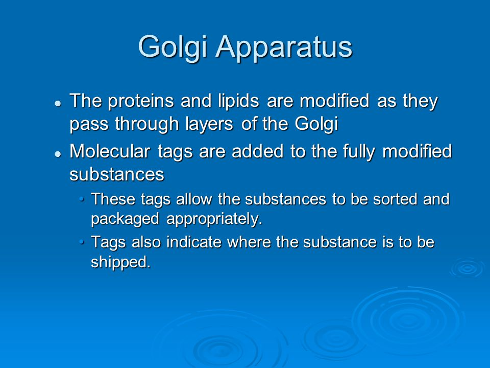 Golgi Apparatus The proteins and lipids are modified as they pass through layers of the Golgi.