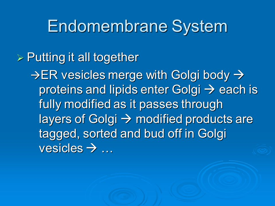 Endomembrane System Putting it all together