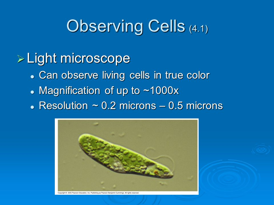 Observing Cells (4.1) Light microscope