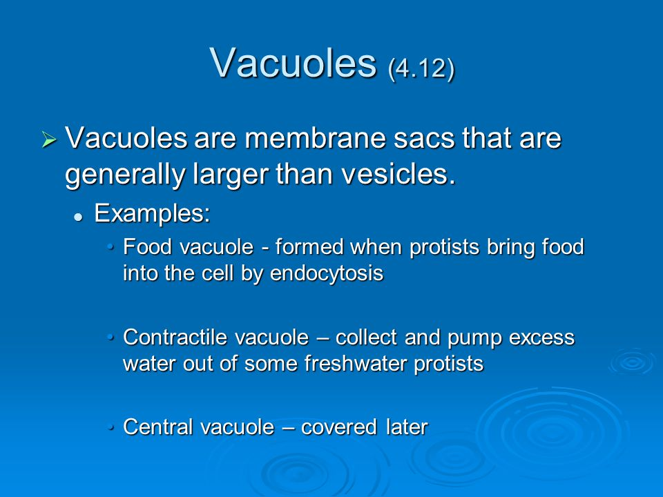 Vacuoles (4.12) Vacuoles are membrane sacs that are generally larger than vesicles. Examples: