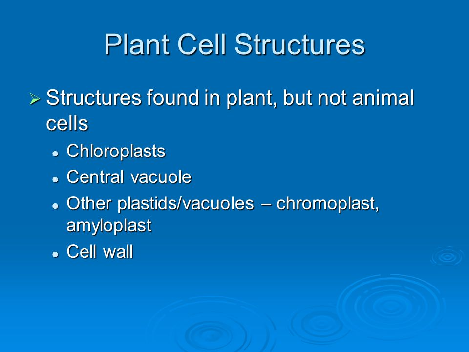 Plant Cell Structures Structures found in plant, but not animal cells