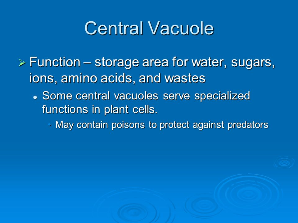 Central Vacuole Function – storage area for water, sugars, ions, amino acids, and wastes.