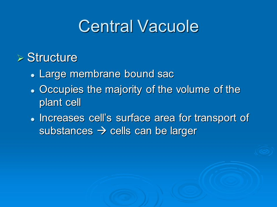 Central Vacuole Structure Large membrane bound sac