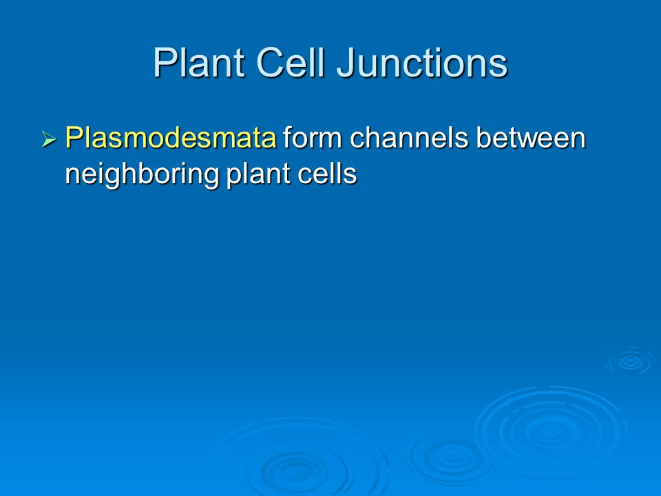 Plant Cell Junctions Plasmodesmata form channels between neighboring plant cells