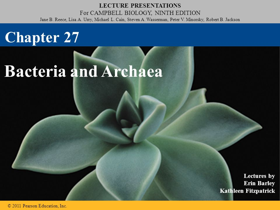 Chapter 27 Bacteria and Archaea