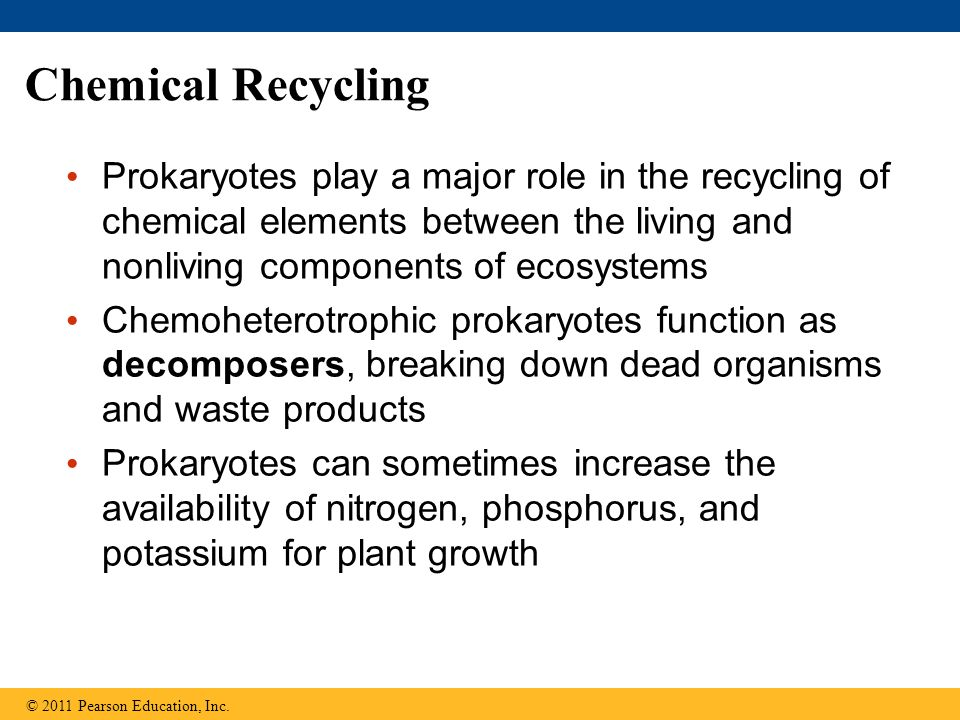 Chemical Recycling Prokaryotes play a major role in the recycling of chemical elements between the living and nonliving components of ecosystems.