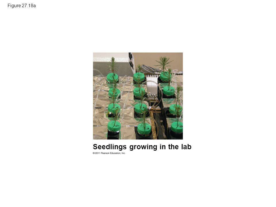 Seedlings growing in the lab