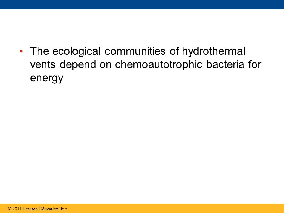 The ecological communities of hydrothermal vents depend on chemoautotrophic bacteria for energy