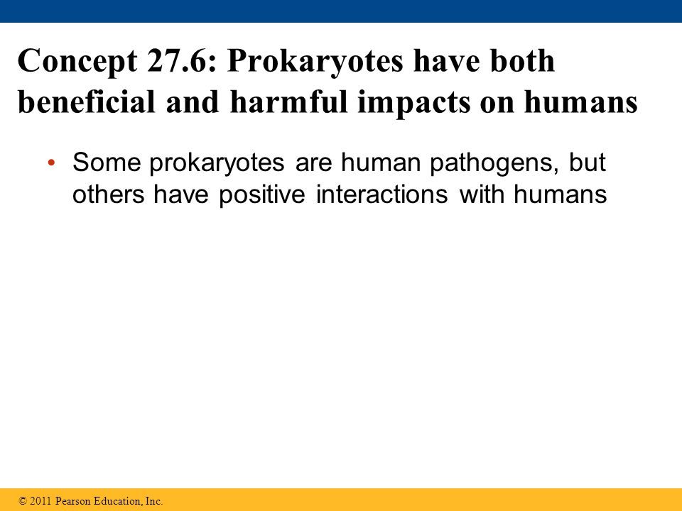 Concept 27.6: Prokaryotes have both beneficial and harmful impacts on humans
