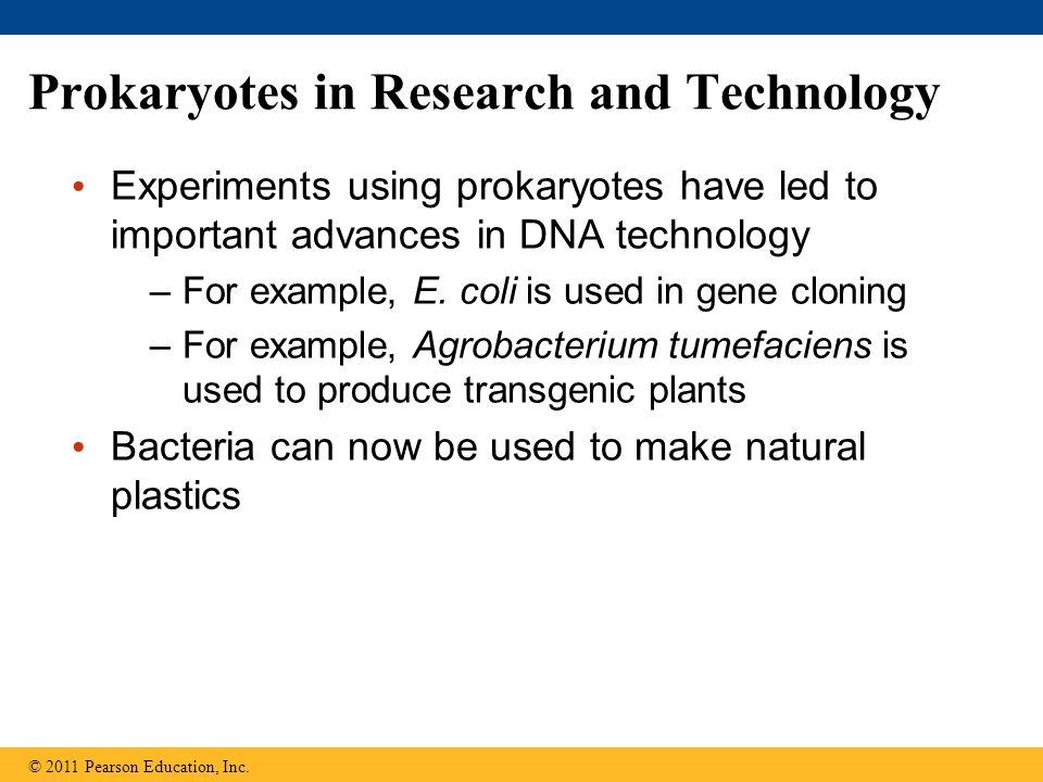 Prokaryotes in Research and Technology