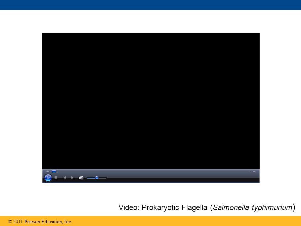 Video: Prokaryotic Flagella (Salmonella typhimurium)