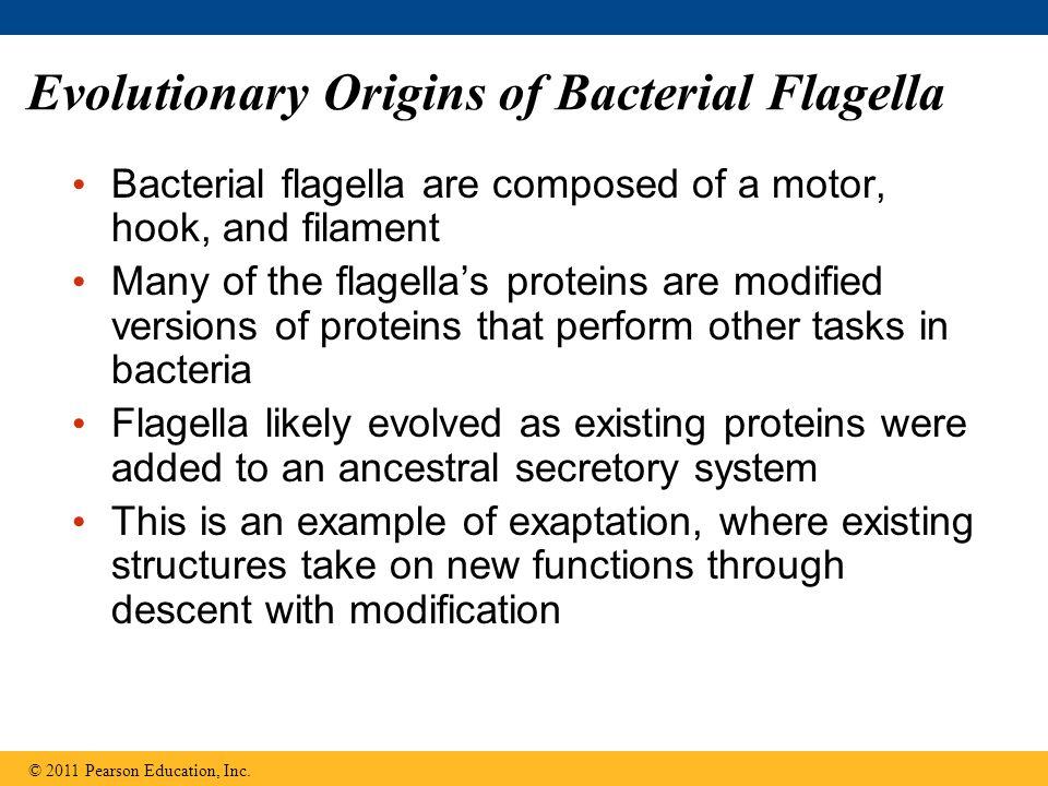 Evolutionary Origins of Bacterial Flagella