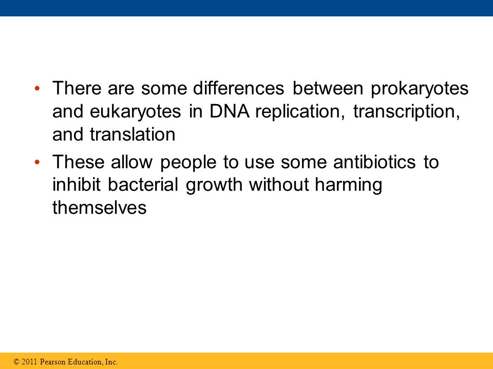 There are some differences between prokaryotes and eukaryotes in DNA replication, transcription, and translation