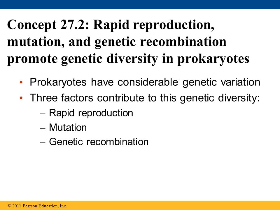 Concept 27.2: Rapid reproduction, mutation, and genetic recombination promote genetic diversity in prokaryotes