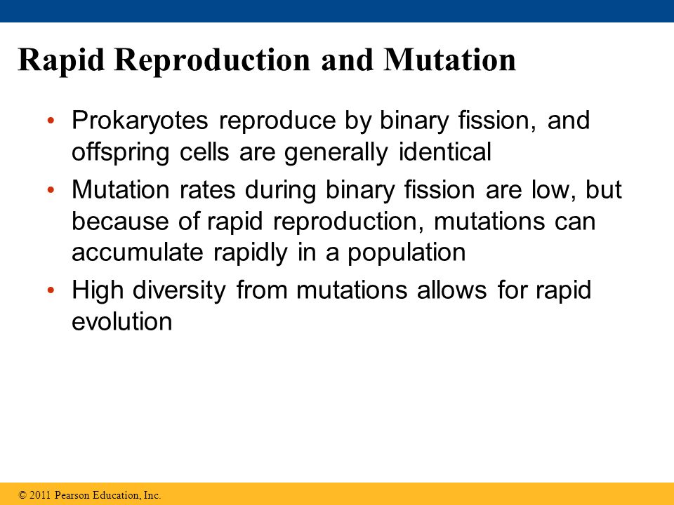 Rapid Reproduction and Mutation
