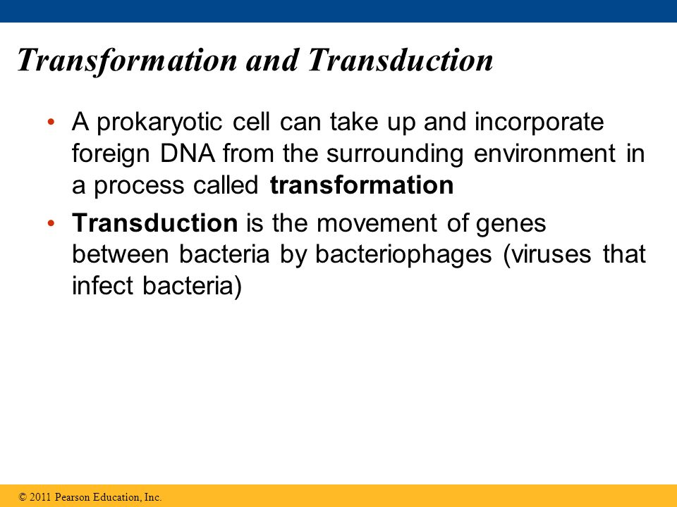 Transformation and Transduction