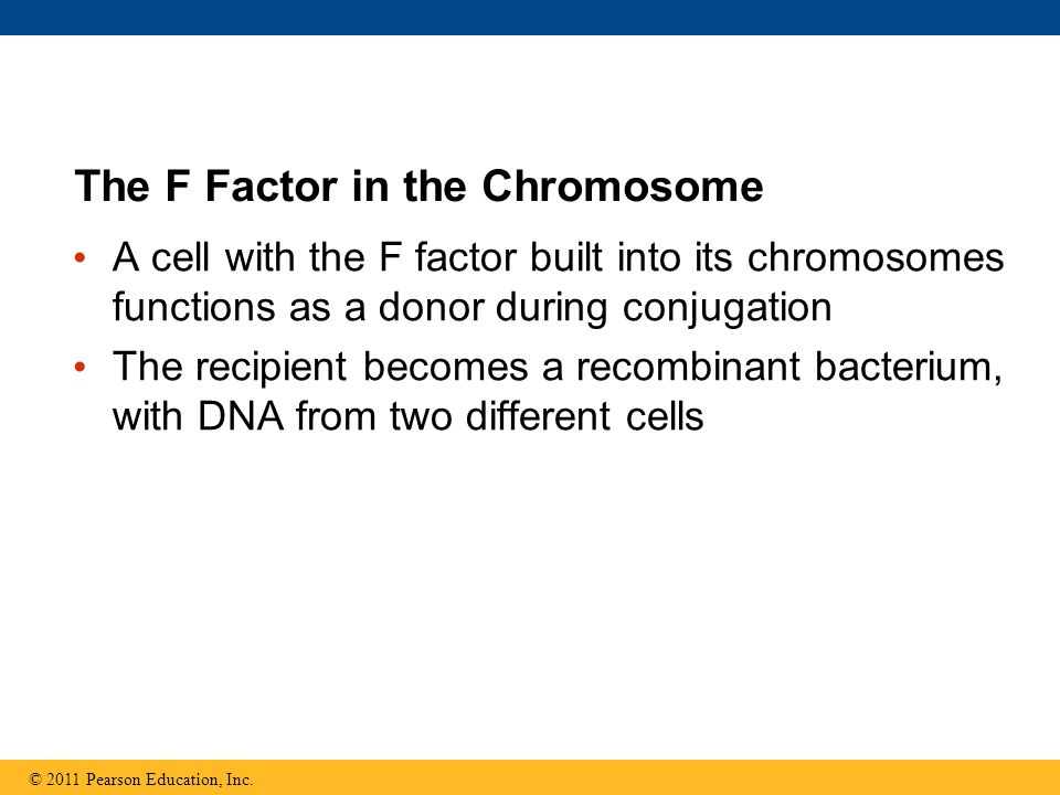 The F Factor in the Chromosome