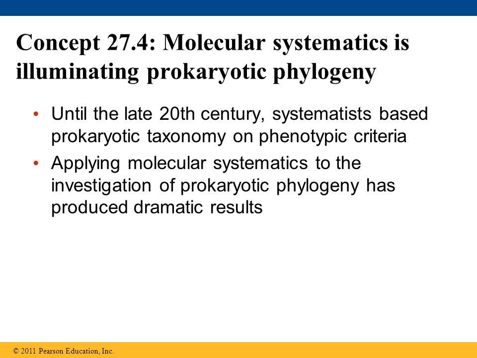 Concept 27.4: Molecular systematics is illuminating prokaryotic phylogeny
