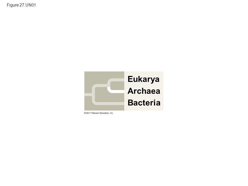 Eukarya Archaea Bacteria Figure 27.UN01