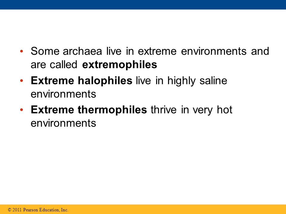 Some archaea live in extreme environments and are called extremophiles