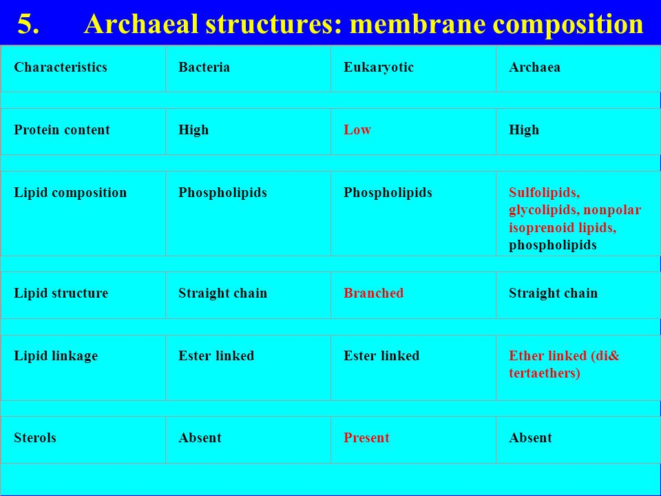 5. Archaeal structures: membrane composition