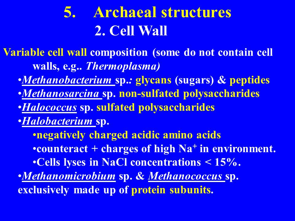 5. Archaeal structures 2. Cell Wall