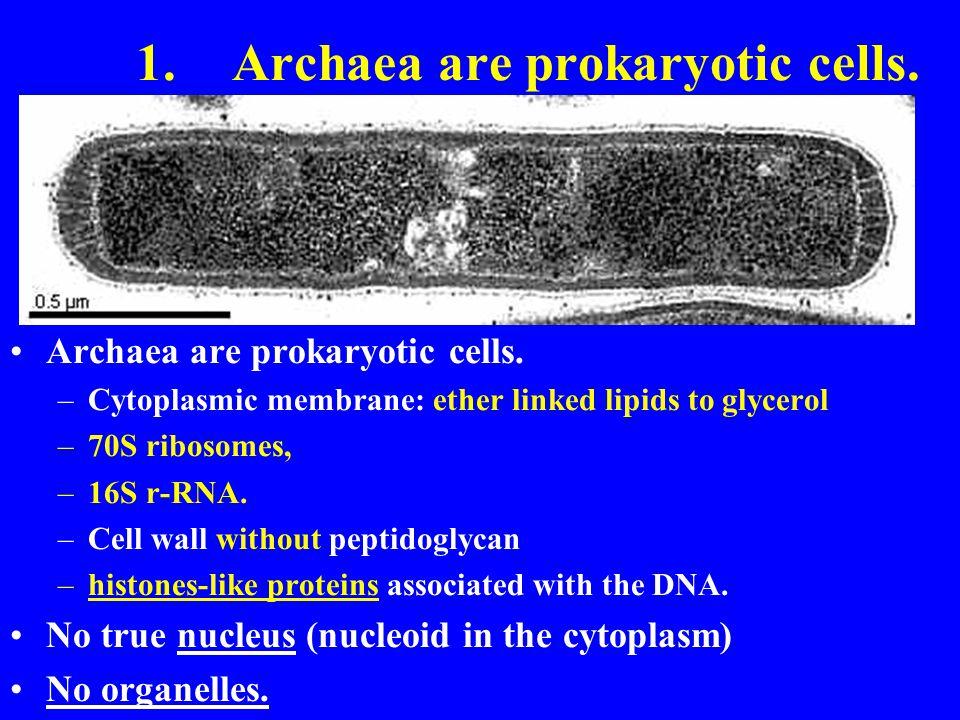 1. Archaea are prokaryotic cells.