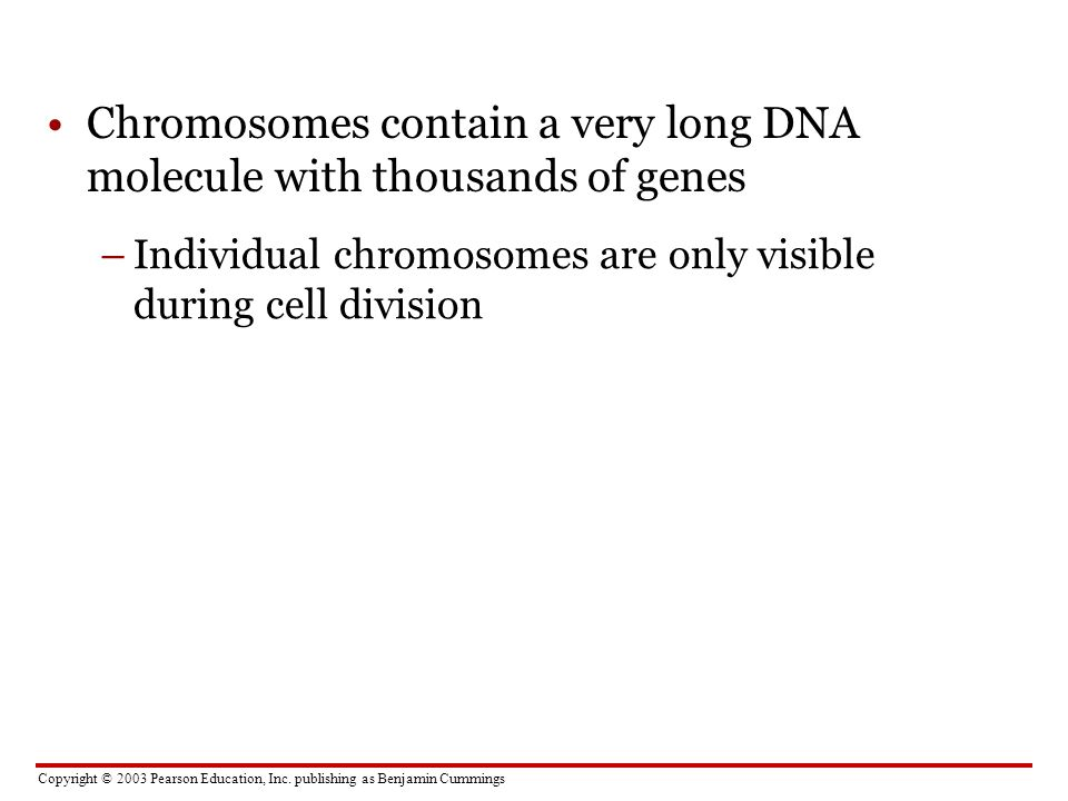 Chromosomes contain a very long DNA molecule with thousands of genes