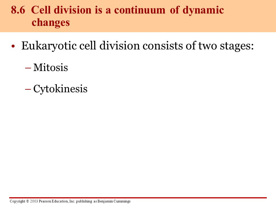 8.6 Cell division is a continuum of dynamic changes