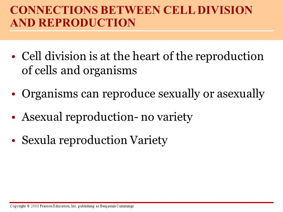 CONNECTIONS BETWEEN CELL DIVISION AND REPRODUCTION